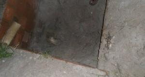 corpo de mulher encontrado em fossa